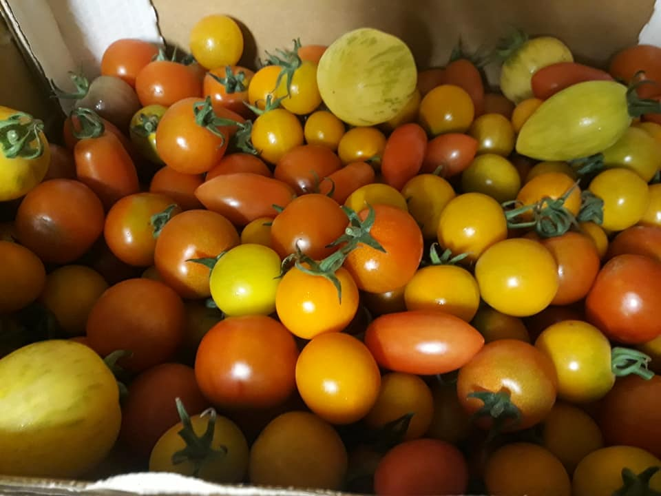 Riversfield-cherry-tomatoes